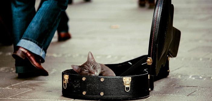 La música que amansa a los gatos