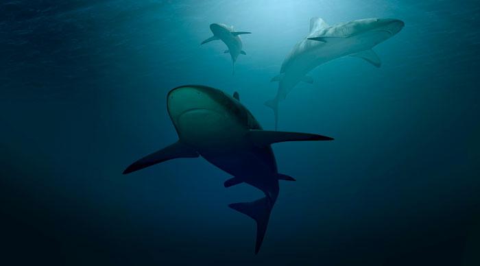 Nadie abandona su hogar, a menos que el hogar sea la boca de un tiburón