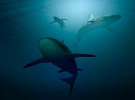 Nadie abandona su hogar, a menos que el hogar sea la boca de un tiburón portada