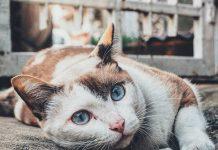 Oda al gato portada