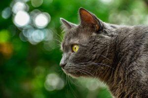 Oda al gato  3