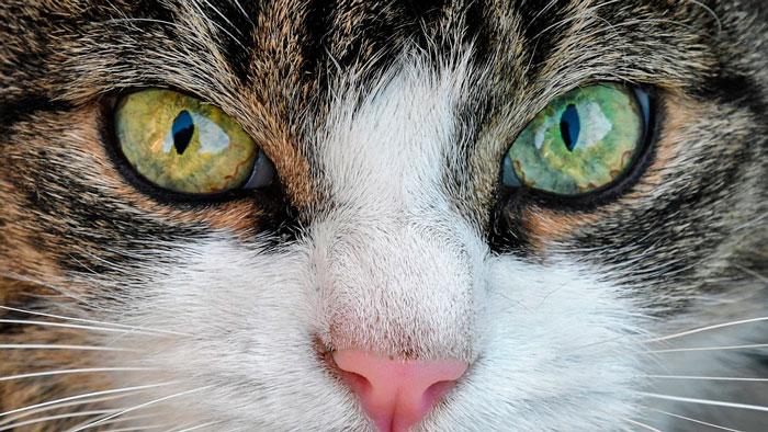 Oda al gato 2
